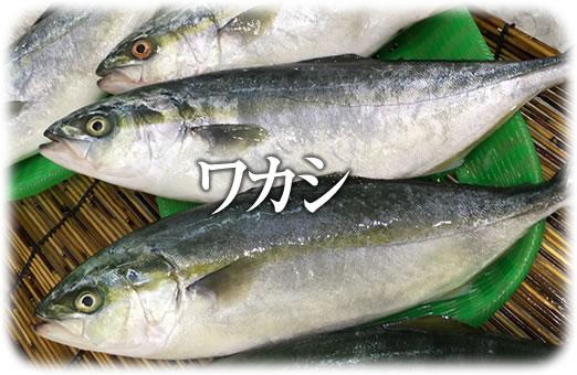 魚 へん に 若い